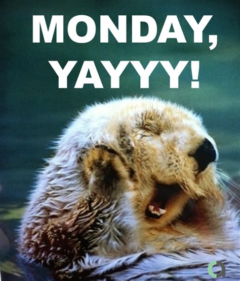 Happy Monday Meme - happy monday memes 35472 linepc