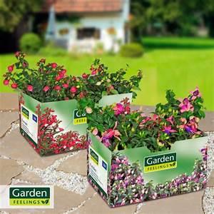 Garden Feelings Aldi : garden feelings fuchsien von aldi nord ansehen ~ Orissabook.com Haus und Dekorationen