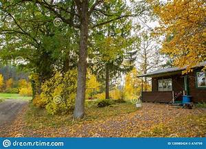 View, On, Cute, House, In, Autumn, Forest, With, Yellow, Trees, And, Green, Pine, Trees, Stock, Photo