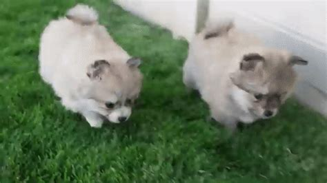 Dog Rolls Gif Find Share On Giphy