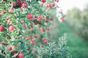 High Acres Fruit Farms - Riveridge Produce Marketing, INC.