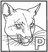 Panther Coloring Pages Printable Animal Drawing Head Sheet Marvel Animals Template Para Adults Sketch Pantera Colorir Desenhos Getdrawings 38kb 711px sketch template