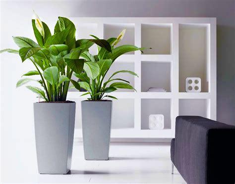 plante de bureau the workplace collection discover office plant rentals