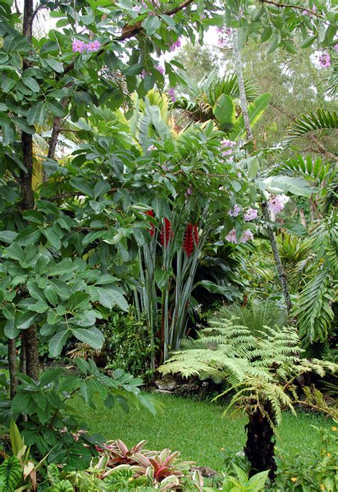 Heliconia Perfection At Jesse Durko's Nursery Gardening
