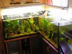 L Form Aquarium : aquarium von gerhard schwab becken 3106 ~ Sanjose-hotels-ca.com Haus und Dekorationen