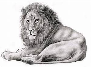18+ Lion Pencil Drawing Free Sketch Designs | Creative ...
