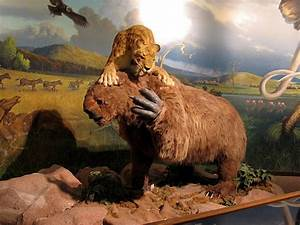 So That's Where All The Woolly Mammoth's Went… – Random ...