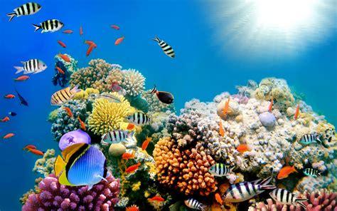 Fish Background Fish Background Wallpapersafari