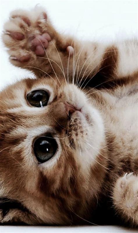 1000+ Ideen Zu Katzenbabys Auf Pinterest Bezaubernde