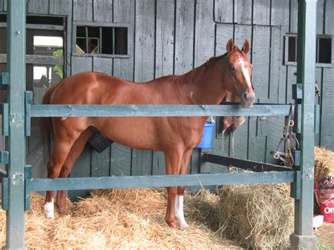 shake   horse racing   york   albany