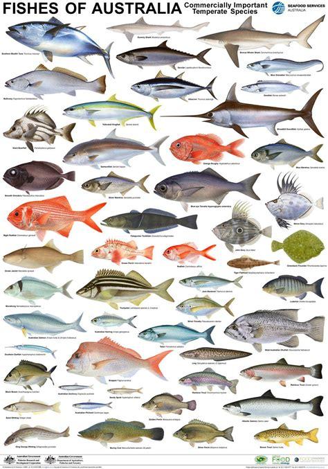 fish  oceania