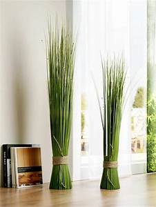 Feng, Shui, Plants, For, Harmony, And, Positive, Energy, In, The, Living, Room