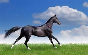 صور حصان مضحك - خلفيات خيول مضحكة hd   الوليد