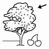 Coloring Tree Cherry Pages Preschool Worksheets Comment Preschoolactivities sketch template