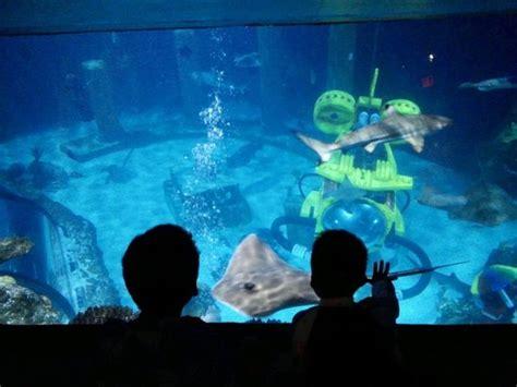 legoland sea aquarium picture of legoland california carlsbad tripadvisor