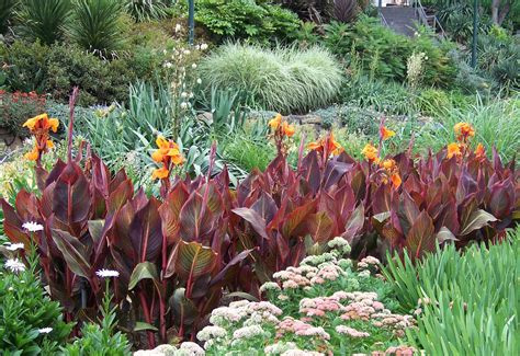 tropical garden plants list colourful combos utilising pots for tropical plants completehome