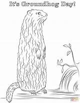 Groundhog Coloring Pages Printable Groundhogs Supercoloring Drawing Skip sketch template
