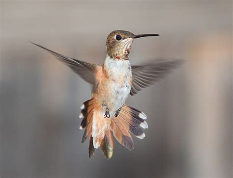wild birds unlimited how long hummingbirds stay