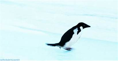 Penguin Gifs Penguins Funny Adorable Happy Animals