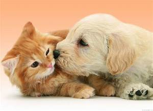 Wallpaper Puppy Dog kissing cat - My HD Wallpapers