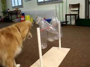 Hunde Intelligenzspielzeug Selber Machen : hund mit flaschenorgel animal enrichment pinterest ~ A.2002-acura-tl-radio.info Haus und Dekorationen