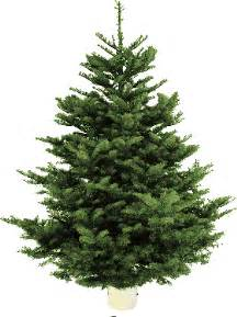 where to buy real trees in and around edinburgh the list