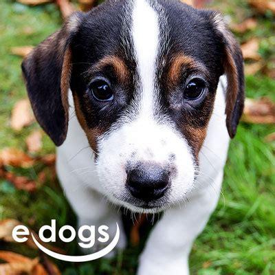 hunde kaufen und verkaufen hundemarkt edogsde kamigudo