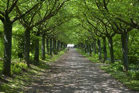 Andy Chubb Photography Treelined Avenue, Abbeye De Valloires