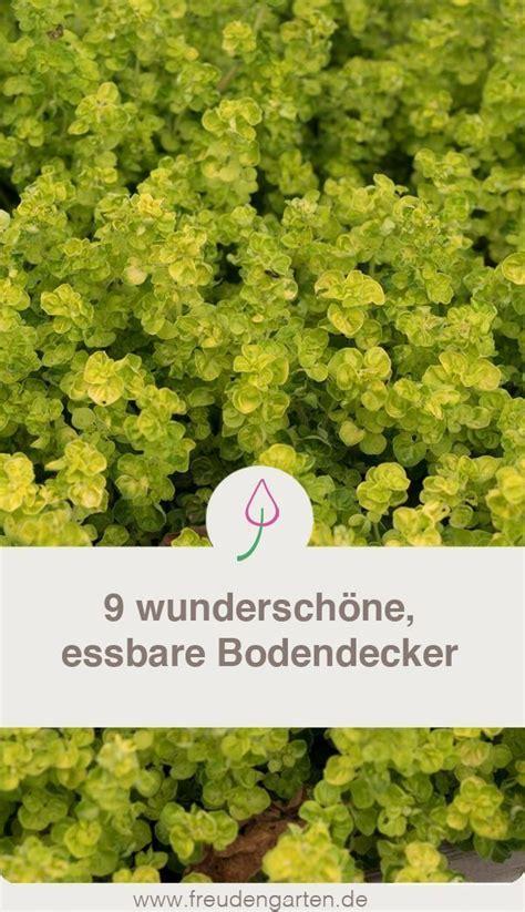 garten für faule essbare bodendecker f 252 r faule g 228 rtner garten garden plants diyprojectgarden club