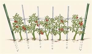 Adrienne U0026 39 S Corner  Tomato Update  Florida Weave Supports