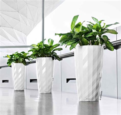 contemporary indoor plants mid century modern house plants