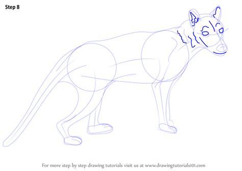 learn   draw  tasmanian tiger wild animals step