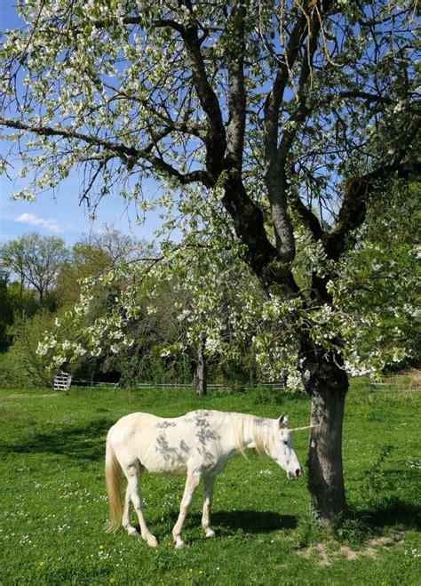 imagen de unicornio real foto gratis
