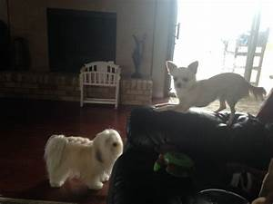affordable pet boarding inn in denton texas tx With affordable dog boarding