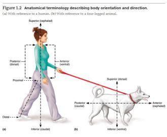 lab  anatomy physiology   gardner  onondaga