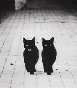 30 Photos Magiques En Noir Blanc Illustrant La
