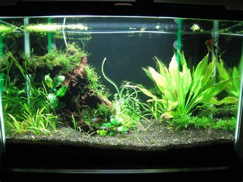 freshwater aquarium fish 29 gallon tank 2017 fish tank maintenance