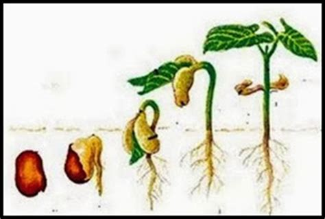 teknik pembibitan tumbuhan pengertiannya andi goda
