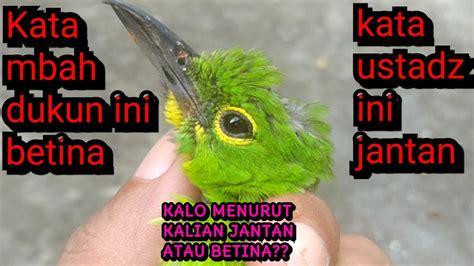 Burung flamboyan jantan memiliki warna paruh bawah yang lebih gelap. Paling Populer 17+ Gambar Burung Flamboyan Jantan Dan Betina - Gani Gambar