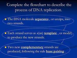 chromosomes and dna replication ppt download With explain how dna serves as its own template during replication