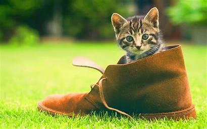 Kitten Shoe Cute Wallpapers Desktop 4k