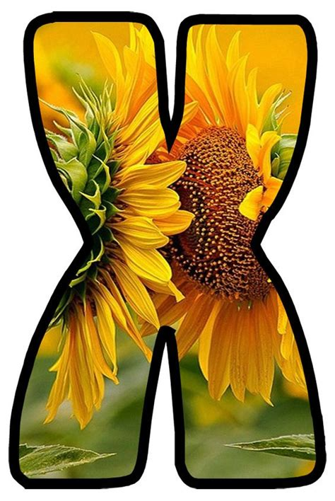 buchstabe letter  monogram alphabet sunflower letters alphabet