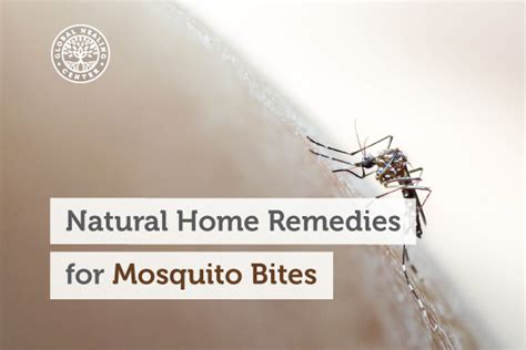 Natural Home Remedies For Mosquito Bites Christmas Candy Sleigh Craft Mexican Ornaments Crafts Recipes Crafting Gift Ideas For Kids Centerpieces Images Preschool Fair