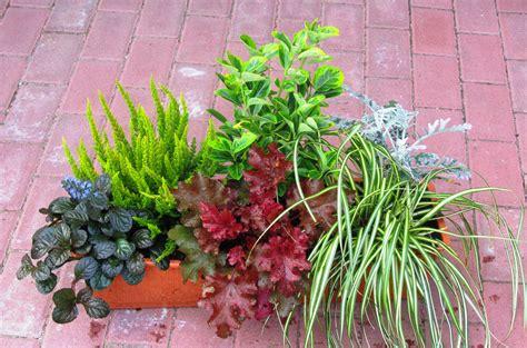 Winterpflanzen Für Balkon by Balkonpflanzen Set F 252 R Balkonk 228 Sten 60 Cm Lang Pflanzen