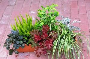 Winterharte Pflanzen Für Balkonkästen : balkonpflanzen set f r balkonk sten 60 cm lang pflanzen versand f r die besten winterharten ~ Orissabook.com Haus und Dekorationen
