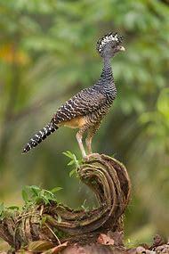 Award-Winning Photography Birds