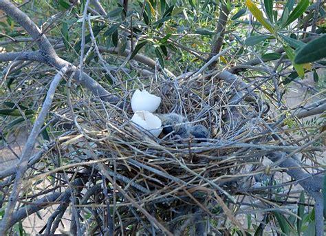 birdernaturalist baby birds in the yard