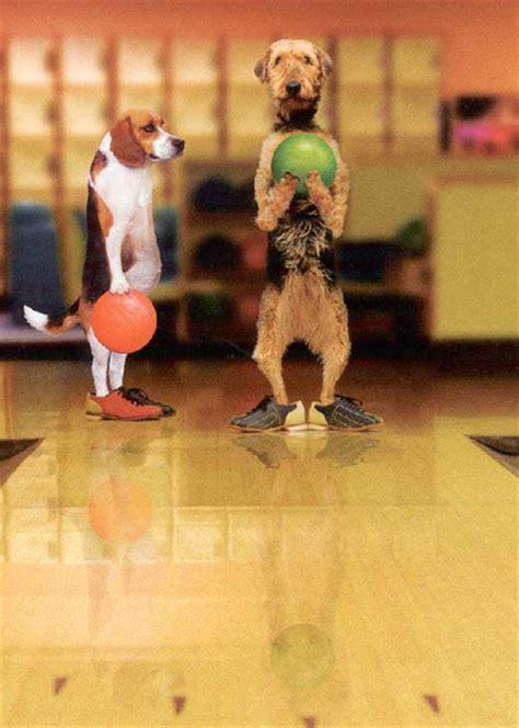 bowling dogs funmunchcom