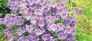 Arbuste Plein Soleil Longue Floraison : fleurs vivaces longue floraison ~ Premium-room.com Idées de Décoration