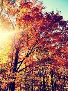 autumn colours | Tumblr